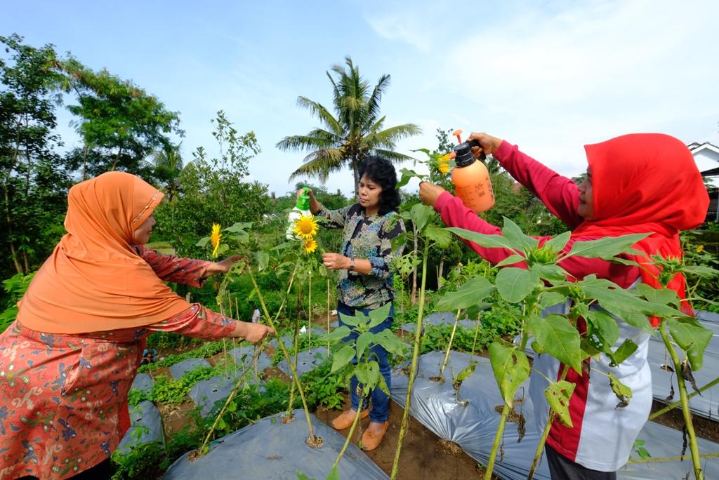 Sejumlah Warga Pinggirejo Merawat Tanaman Bunga Dan Hewan Di Kawasan Wisata Edukasi Pertanian Terpadu Pemerintah Provinsi Jawa Tengah