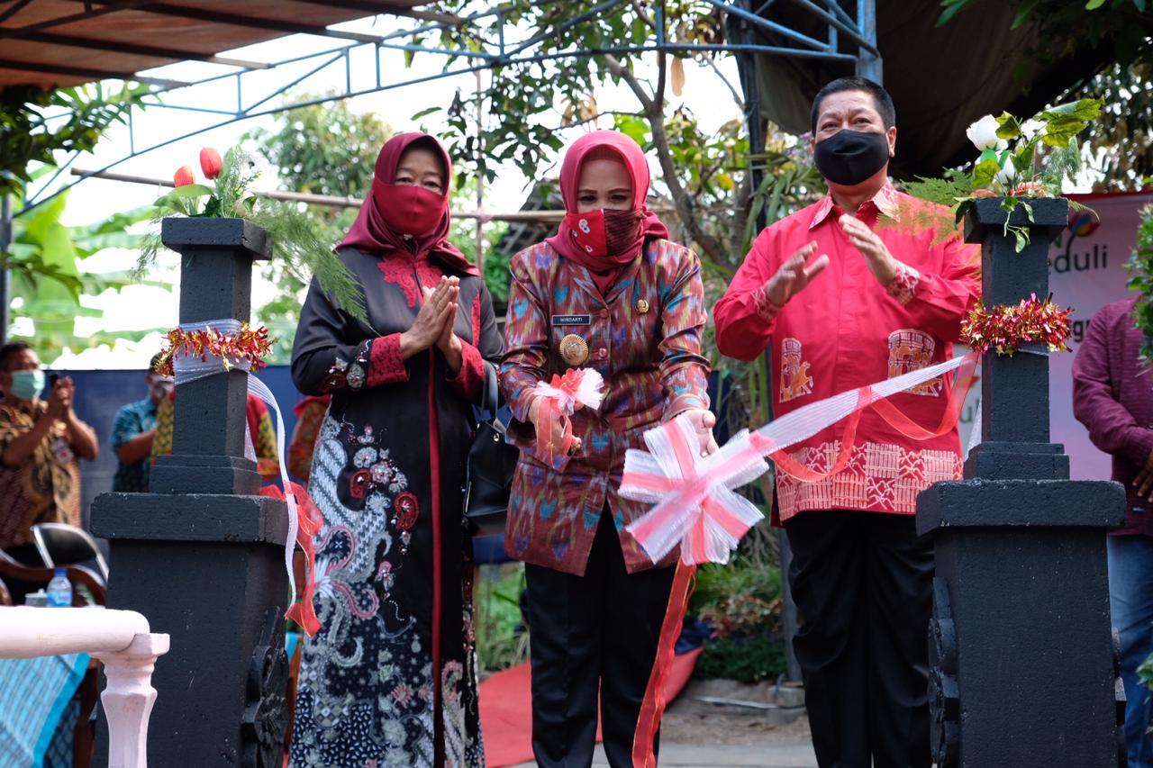 Anggrek Jawa Tengah godean.web.id